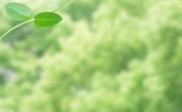 若葉緑葉エコロジー