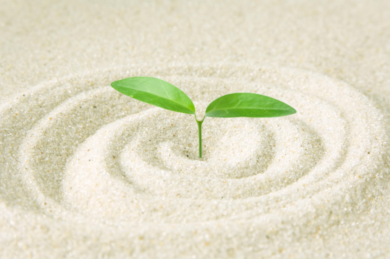 若葉砂エコロジー