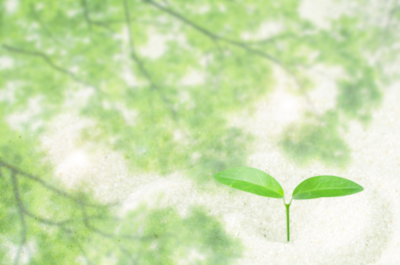 若葉砂エコロジー2